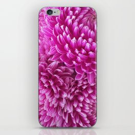 Pink Chrysanthemums iPhone Skin