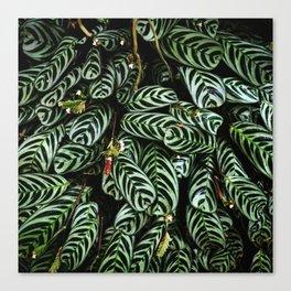 Jungle Greenery Canvas Print