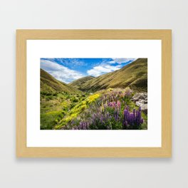 Lupines fields on the side of the road in New Zealand Framed Art Print