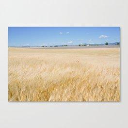 Valensole Wind Canvas Print