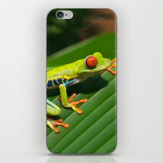 Green Tree Frog Red-Eyed iPhone & iPod Skin