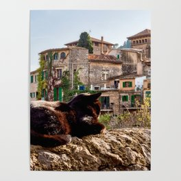 Cat sunbathing on a wall Poster