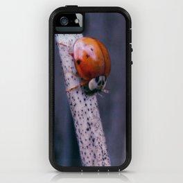 Macro ladybug iPhone Case