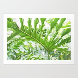 Philodendron leaf Art Print
