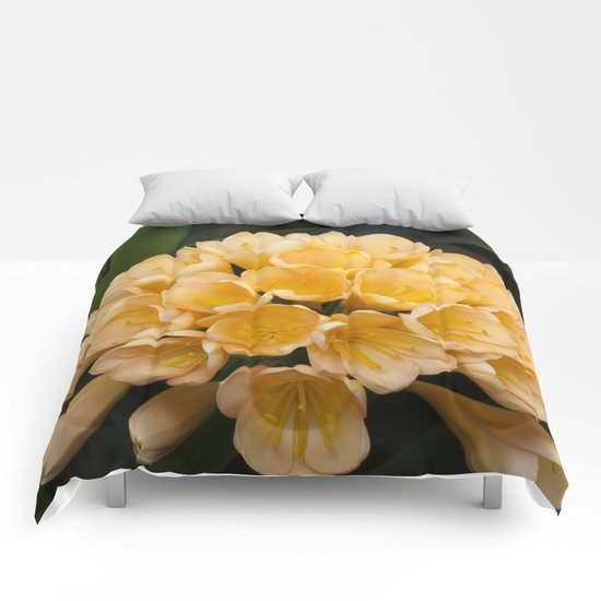 Clivia Apricot Comforters