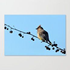 Waxwing on a Winter's Day Canvas Print