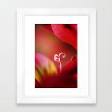 Ruby Sugar Cane Framed Art Print