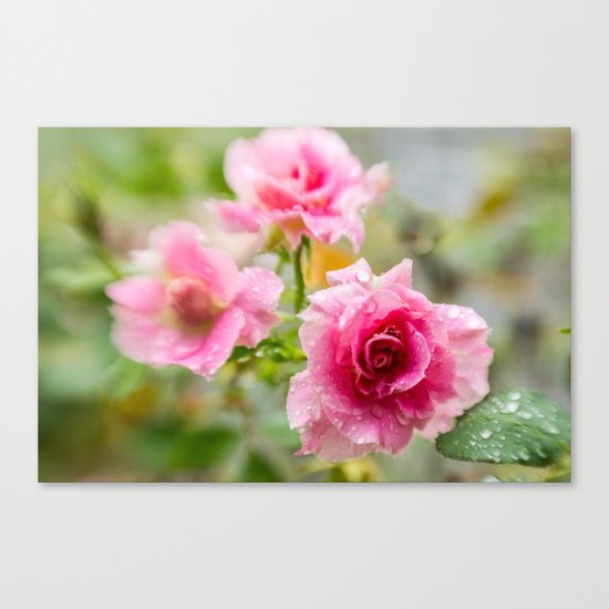 Rain on Those Petals of Yours Canvas Print