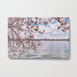 Washington DC Cherry Blossoms - Thomas Jefferson Memorial Metal Print