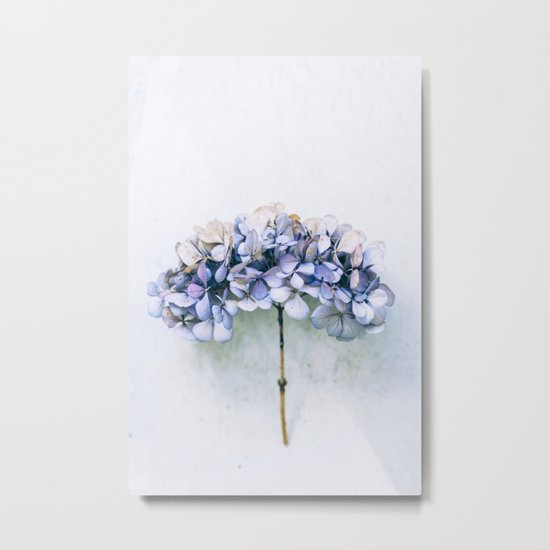 Delicate Hydrangea Metal Print