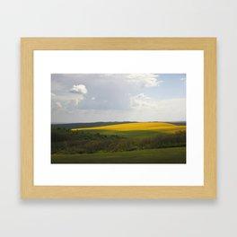 Colza 1 Framed Art Print