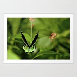 Birdwing Butterfly Art Print