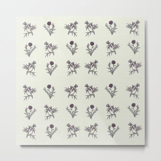 The thistle flowers Metal Print