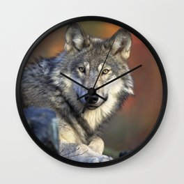 Wild Wolf Photo Wall Clock