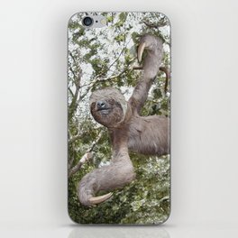 Sloth, A Real Tree Hugger iPhone Skin