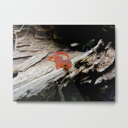 The Charismatic Newt Metal Print
