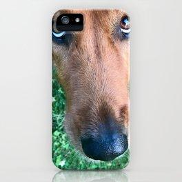 Golden Irish Dog iPhone Case