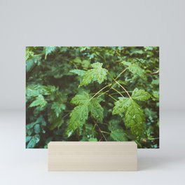 Green Leaves In Rain Mini Art Print
