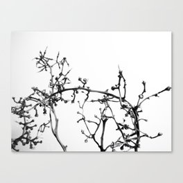 Strange Trees 6 Canvas Print