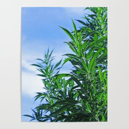 CannaBliss Poster