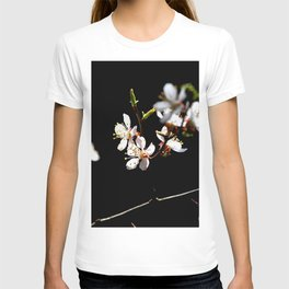 Small Twig Of A Japanese Apricot Tree. White Sunlit Flowers. Black Background T-shirt