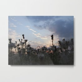Dusk with Thistles Metal Print