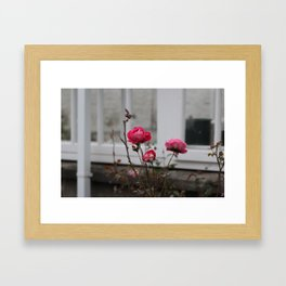 Three Roses Framed Art Print