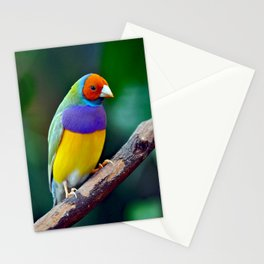 Colorful gouldian finch Stationery Cards