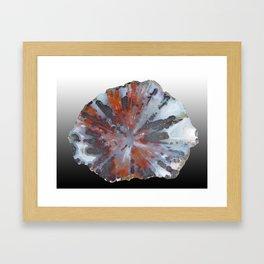 Cady Mountain Aragonite Pseudomorph (Sagenite) Framed Art Print