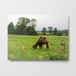 friends of all sizes Metal Print