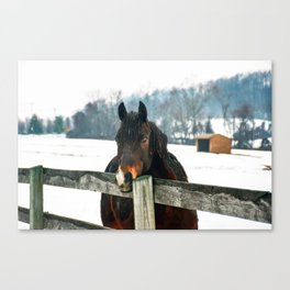 Thoughtful Horse Canvas Print