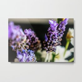 Peaceful Lavender Metal Print