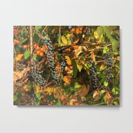 Possum Grapes Metal Print