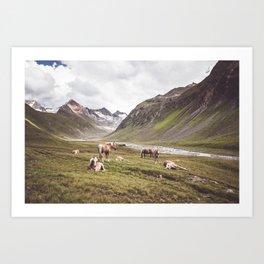 Tyrolean Haflinger horses I Art Print