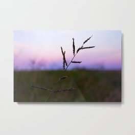 Grass Seed Sunset Metal Print