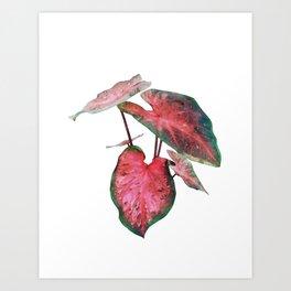 Caladium Red Flash Art Print