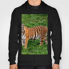 Beautiful Nature Photos With Animals Amazing Tiger Hoody
