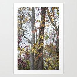 Autumn Trees 2 Art Print
