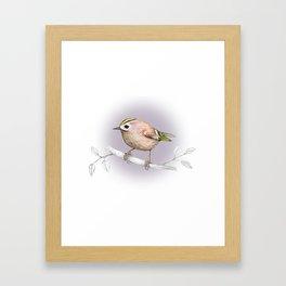 Goldcrest Framed Art Print