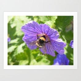 Purple Pollen Art Print