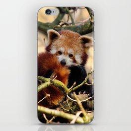 Sleepy Red Panda iPhone Skin