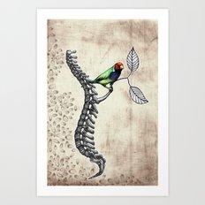 Chloebia Gouldiae Art Print