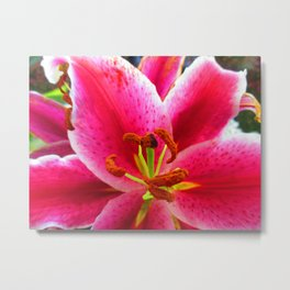Call Me Miss Lily Metal Print