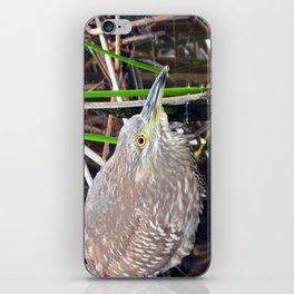 Juvenile Black Crowned Night Heron iPhone Skin