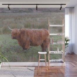 Heilan coo - Highlands cow Wall Mural