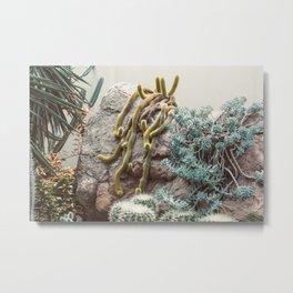 Botanical Gardens II - Cacti #995 Metal Print