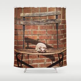 Juni Hedgehog Chillin on Chair Shower Curtain
