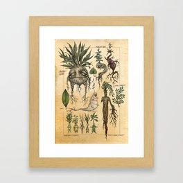 Mandragora Radix Framed Art Print