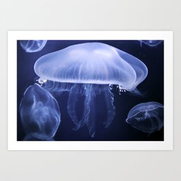 Moon Jellyfish 2 Color Art Print