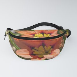 Beautiful Sparaxis Fanny Pack